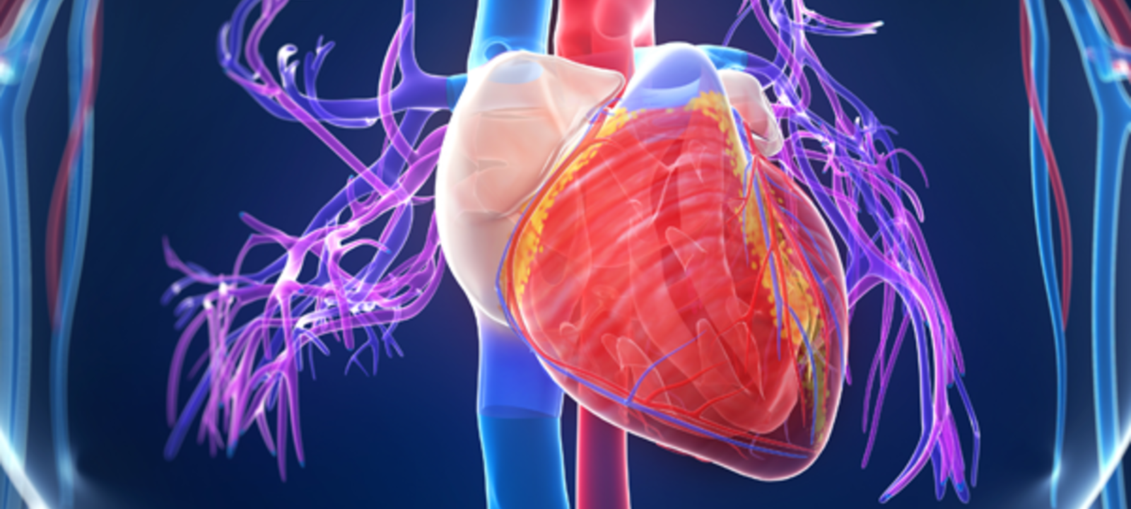 Interventional Cardiology Review Course for Boards and